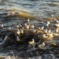 Чайки и волны :: Нилла Шарафан