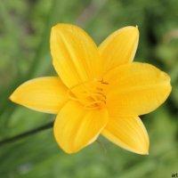 Цветочный хоровод-344. :: Руслан Грицунь