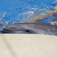 дельфины :: Tatyana Garanova