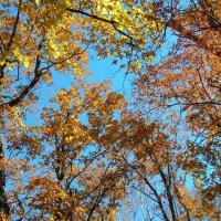 Осень в приморье :: Юрий