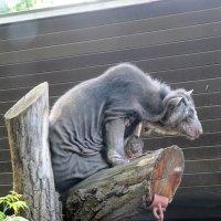Необычное животное :: Виктория Чурилова