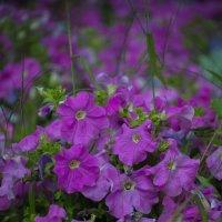 violet :: Софья Оганова