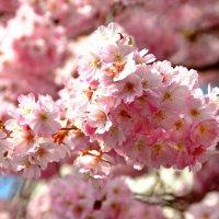 Розовый блюз ... :: Владимир Икомацких