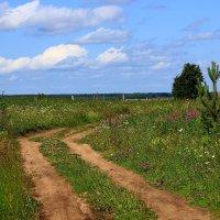 Дорога через луг. :: Galina S*