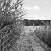 Мосток на р.Медведице :: Татьяна Шустова