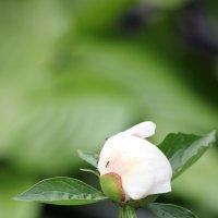 Цветочный хоровод-351. :: Руслан Грицунь