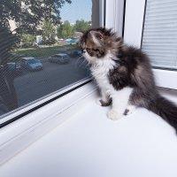 Может там, за окном все не так уж и страшно, как мне говорят? :: Анатолий Тимофеев
