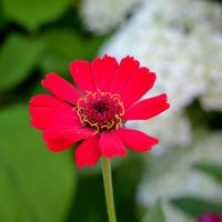 Цветок :: Светлана Пантелеева