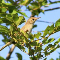 Из жизни птиц :: TATYANA PODYMA
