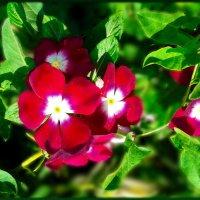 Разбросало лето свои краски... Нарядило улицы в цветы... :: Людмила Богданова (Скачко)