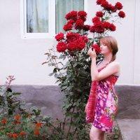 розы :: оленька вяткина