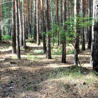 В лесу :: Elena N
