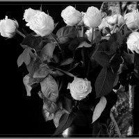 Белые розы. :: Валерия  Полещикова