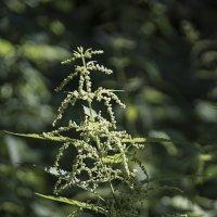 Цветок лесной. :: Яков Реймер