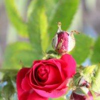 Цветочный хоровод-359. :: Руслан Грицунь