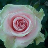 Цветочный хоровод-356. :: Руслан Грицунь