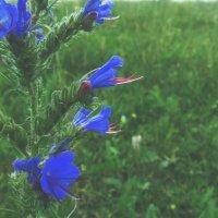 flower :: Юлия Каратаева