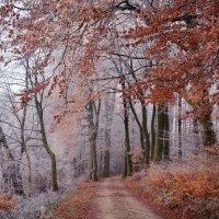 в багрец и золото одетые леса :: Elena Wymann