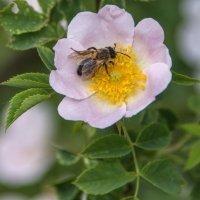 рабочее место пчелки :: Svetlana AS