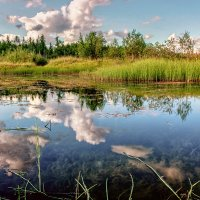 swamp :: Aleksandr Tishkov