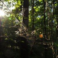 лес :: Олег Платонов