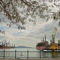 Утро в морском порту :: Константин Николаенко