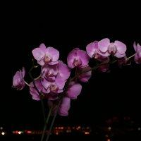 Орхидея над ночным городом :: Леонид
