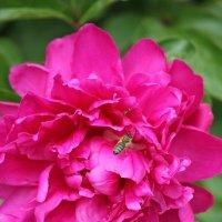 Цветочный хоровод-363. :: Руслан Грицунь