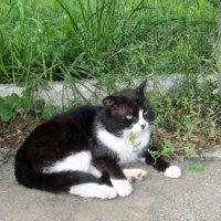 История одного кота .. :: Мила Бовкун
