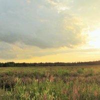 Русское поле :: Yulia Sherstyuk