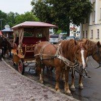 Суздальские лошадки :: Олег Манаенков