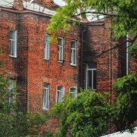 Молодые окна :: Ирина Сивовол
