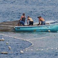 тянут сети рыбаки :: Валерий Дворников