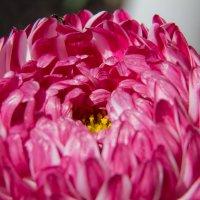 Цветок :: Андрей Синявин