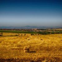 Field :: Konstantine V
