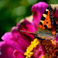 Бабочка :: Снежана Пундуре