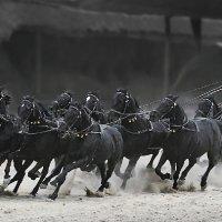 Эй,вы кони, кони звери... :: olegup Olegs Patrejevs