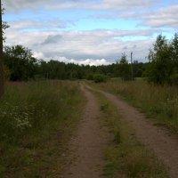 Тропы - дорожки Псковского леса :: Елена Разумилова