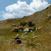 И на камнях растут деревья... :: Yuri Chudnovetz