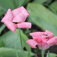 Цветочный хоровод-367. :: Руслан Грицунь