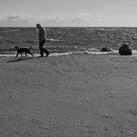 Путниk с собакой на заливе.. :: Владимир Питерский
