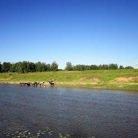 На реке , на речке . :: Мила Бовкун