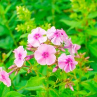 Цветы :: Андрей Вершинин