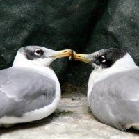 Тоже целуются :: Олег Лукьянов
