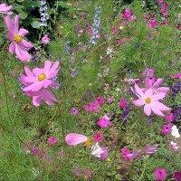 Июньское разноцветье :: Нина Корешкова