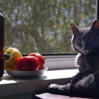 ...солнышко показалось... сиеста  на  кухонном  столе... :: Валерия  Полещикова