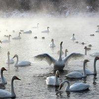 Морозный туман на озере :: И.В.К. ))