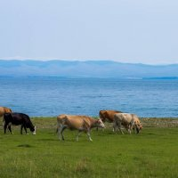 Синие дали - зелёные травы :: Дмитрий Обухов