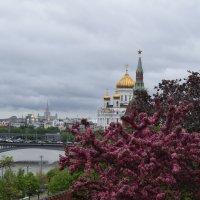 Кремлёвские пейзажи мая :: Андрей