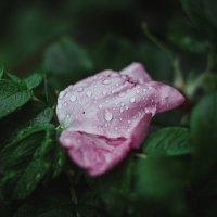 Дождь :: Сергей Потлов